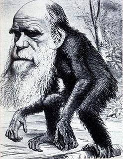 Darwin_monkey