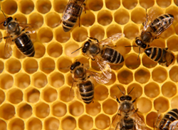 bees-inside-hives