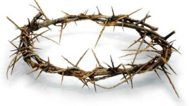 crown of thorns lg