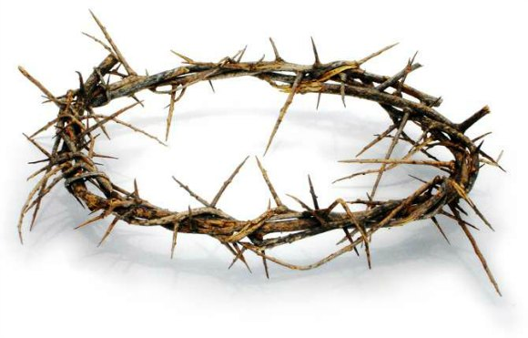 crown of thorns lg
