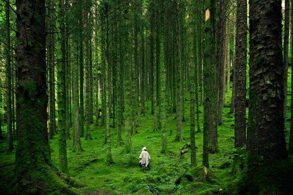 OvercomeForest